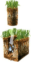 Core Aeration: The Way to Reach the Roots of Your Grass and Keep it Lush and Green