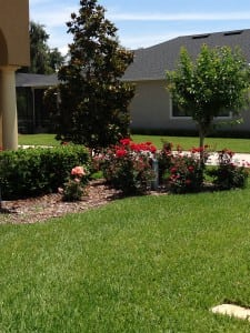 Shrub Treatments in Lakeland, FL