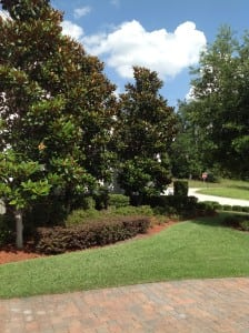 Tree Treatments in Lakeland, FL