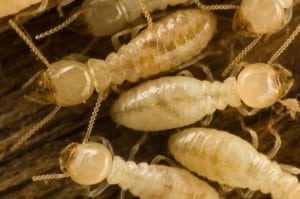 Call us today to learn more about termite inspections, Lakeland, FL