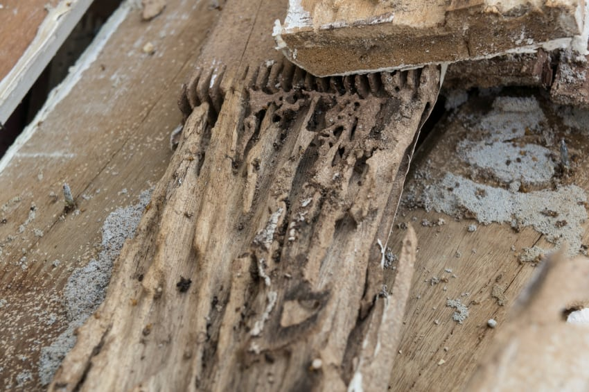 Don't Let Termite Treatments Eat You Up