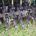 Core Aeration in Auburndale, Florida