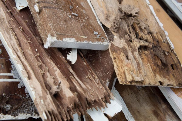 Defend Your Home with Termite Control Services