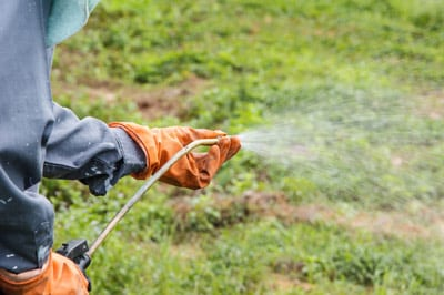 Lawn Spraying in Auburndale, Florida
