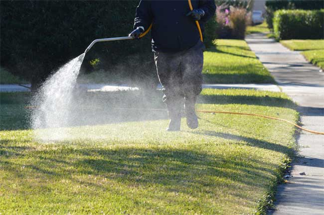 Outdoor Pest Control Makes Sure You Can Enjoy Your Yard