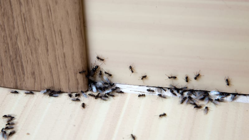 Pest Control Services You Can Count On