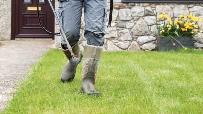 Lawn care services can help get rid of your pest and fungus problems for good