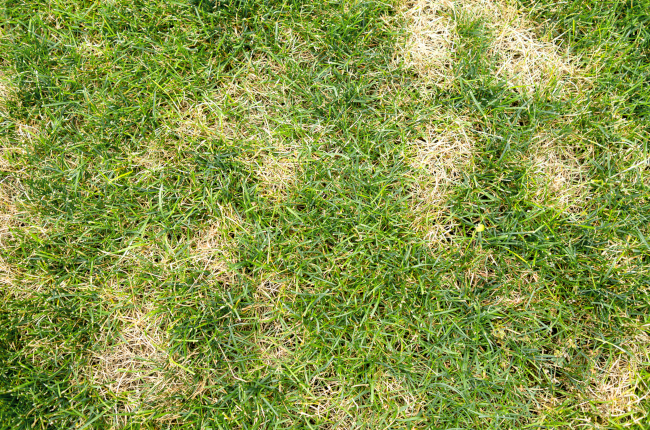 Why is My Lawn Getting Brown Spots?