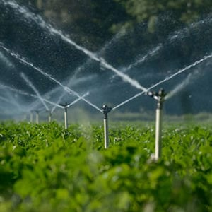 A Beginner's Guide to Irrigation Services