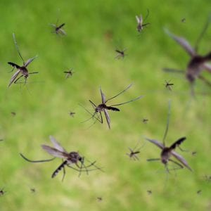 Benefits of Professional Mosquito Spraying
